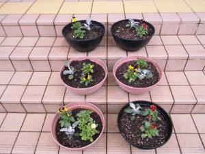 フローラルこまつの花を咲かせましょう!!